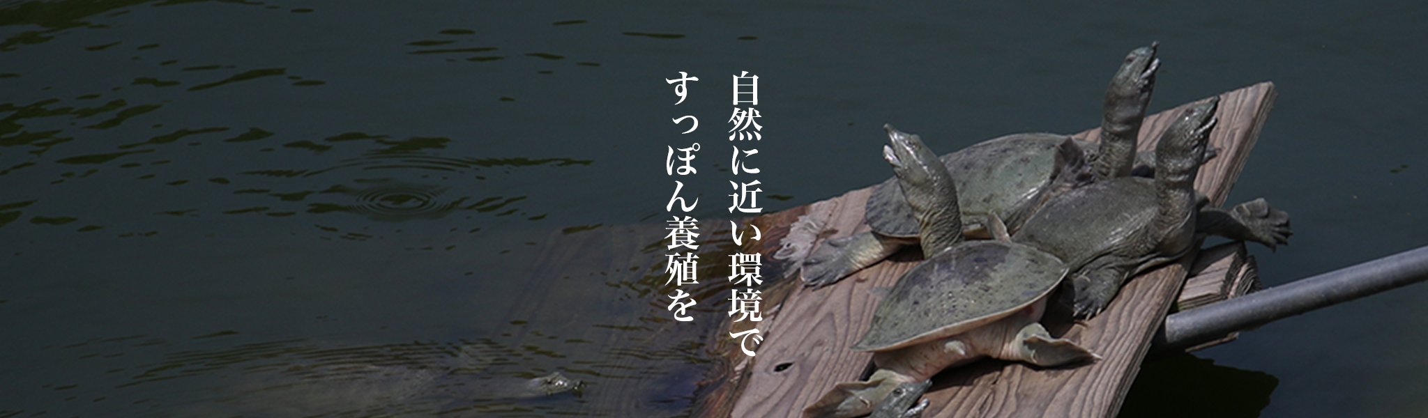 nagasaki-supponn